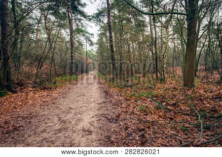 Narrow Sandy Path Meandering Through The Autumn Forest. Many Brown Fallen Leaves Are On The Forest F
