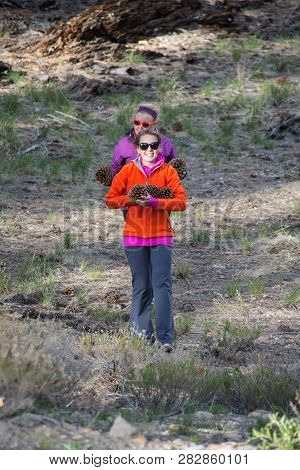 Two Adult Females Happily Walk With An Armful Of Large Jeffrey Pine Cones Found On The Forest Floor