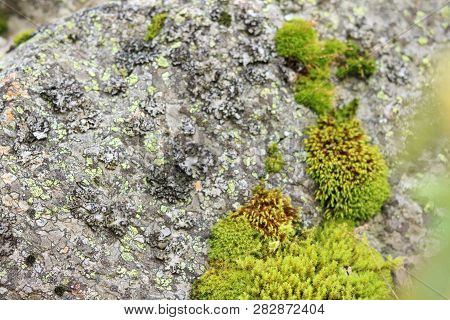 Natural Moss On Stones. Texture In Nature. Abstract Background. Rock Surface With Lichen And Moss Te