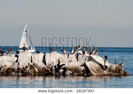 Florida Pelicans 2012