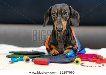 Adorable Dog Breed Of Dachshund, Black And Tan, In Body Measuring Ruler Sewing Tailor Tape Measure,