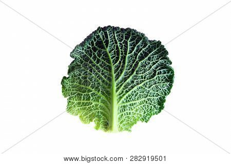 leaf of an organic savoy cabbage, a healthy winter vegetable with crinkled surface, isolated on a white background poster