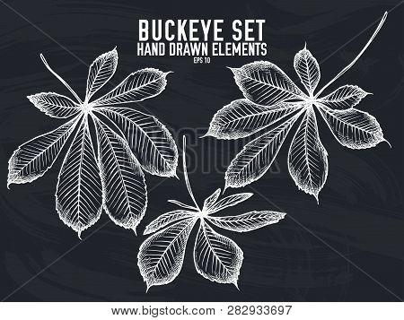 Vector Collection Of Hand Drawn Chalk Buckeye