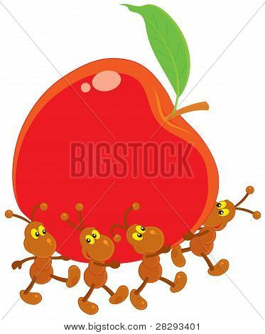 Ants carrying a red apple