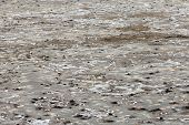 The surface of tidal flats with salt formations at the Gambia river in West Africa. poster