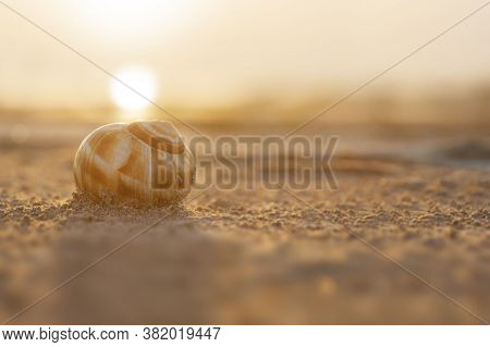 Snail Shell With Sand And Sunset On The Burdur Lake In Turkey