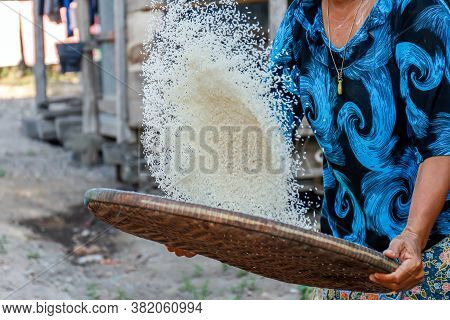 Rice Grain With Threshing Basket In The Hands Farmer, Rice Production Food Rural Culture Of Asians