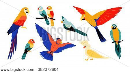 Parrots. Colorful Cartoon Tropical Birds, Flying And Sitting Wild Jungle Parrot, Isolate Collection