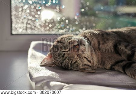 Lazy Tabby Cat Sleeping On A Window Sill. Portrait Of A Cozy Cat Under Sunshine With Bokeh Lights On