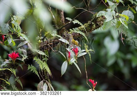 Background Of Beautiful Red Wildflowers, With Streaked Spiderhunter Perching On The Flowers, High An