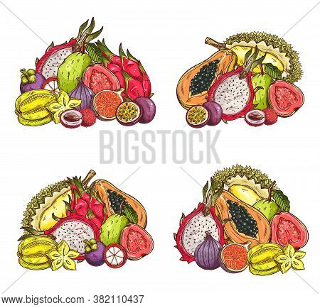Tropical Fruits Vector Sketch, Isolated Orchard Harvest Exotic Lychee, Mangosteen, Fig And Dragon, P