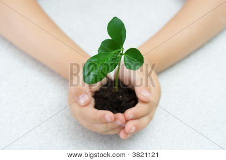 Small Green Plant In Children\'S Palms