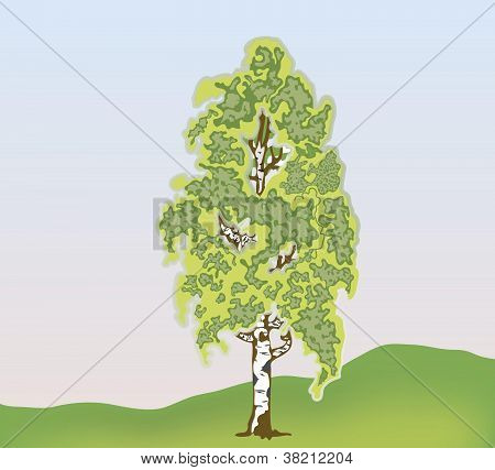 Vector birch