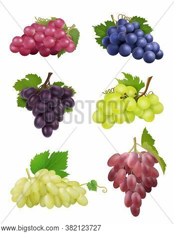 Grapes Realistic. White And Black Grapes With Leaves Natural Plants Wine Symbols Vector Collection.