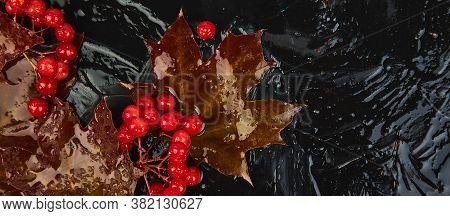 Banner Of Autumn Background With Autumn Maple Red Leaves And Viburnum Berries