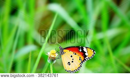Thai Butterfly In Pasture Flowers Insect Outdoor Nature