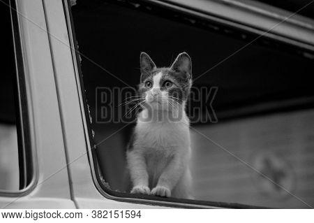 Homeless Kitten Sitting In A Wrecked Car