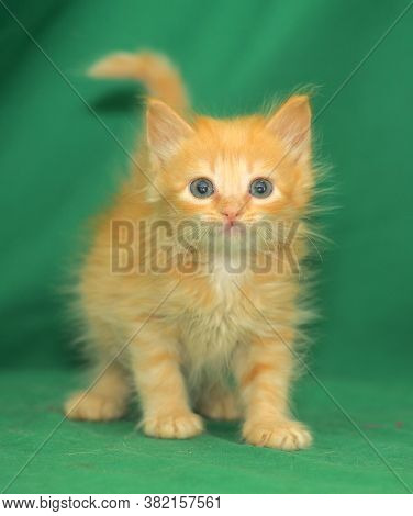 Red Little Kitten On A Green Background