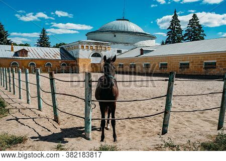 Young Thoroughbred Horse At The Farm Corral