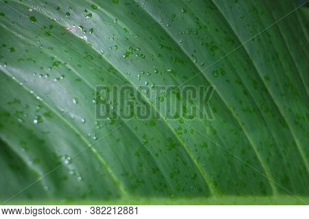 Close Up Many Droplets On Water Fern Leaves In Rainy Day With Dark Background