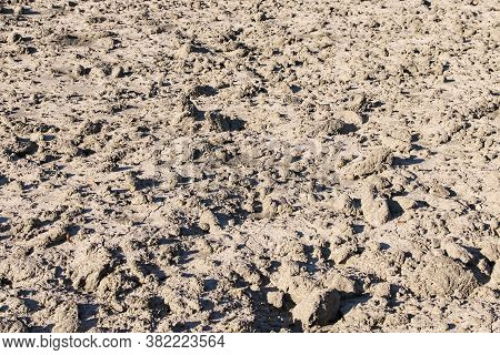 Close-up View Of Empty Land After Harvesting. Dry Black Soil. Black Soil Texture Background. Dark Gr