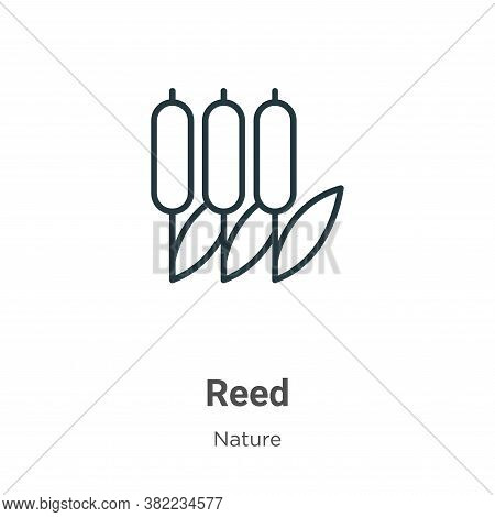 Reed Icon From Collection Isolated On White Background.