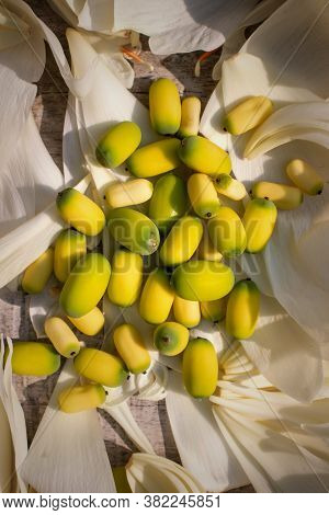 Indian Lotus Seeds Or Nelumbo Nucifera Seeds On Lotus Petals In Vertical Orientation
