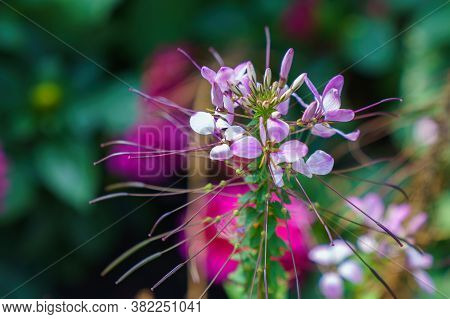 Macro Photography Wonderful Violet Flowers. Dof. Close-up.