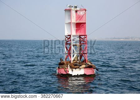Sea Lions. Sea Lions relaxing in the sun.  Sea Lions napping on an ocean buoy.