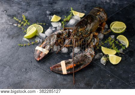 Fresh Lobster, Ice, Vegetables, Lime, Sprigs Of Razmarin, Dark Look. A Dark Background, A Place For