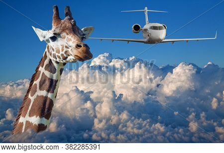 large giraffe head and plane above white clouds