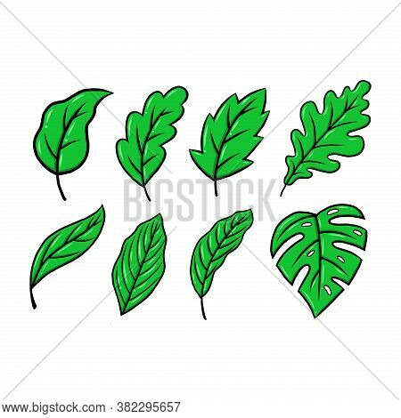 Leaf. Leaf Icon. Green Leaf Vector. Leaf Icon Vector. Leaves Icon. Leaf Vector Icon. Leaf Web Icon.