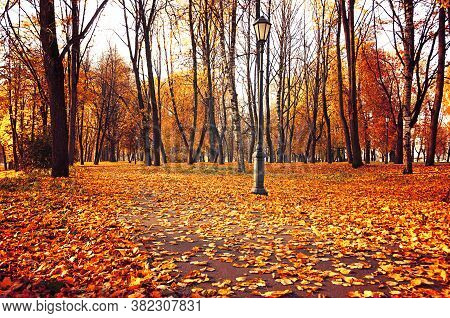 Autumn park landscape. Autumn nature. Fall landscape scene. Colorful autumn landscape, autumn trees in the park. Autumn park nature