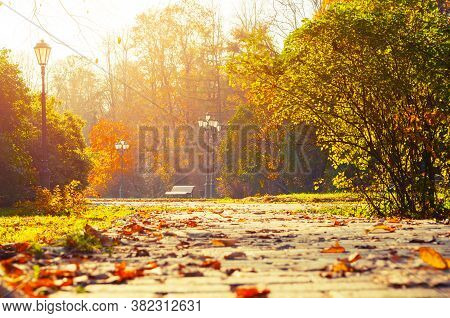 Autumn October landscape. Bench at the autumn park under colorful deciduous autumn trees, sunny autumn background. Autumn city park, colorful autumn landscape view. Autumn trees in the park