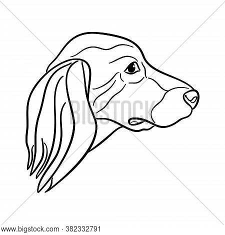 The Spaniel Head Is Isolated On White Background, The Line Art.