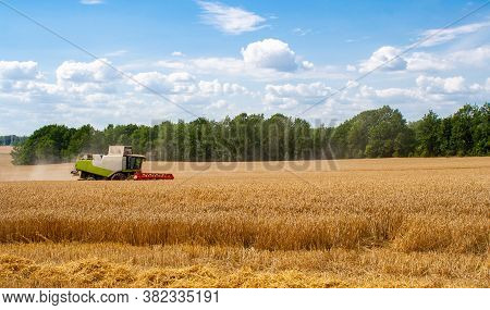 Combine Harvester In Distance Harvests Ripe Wheat In Field, Against Of Trees And Beauty Blue Sky Wit