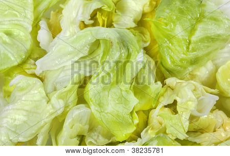 Iceberg Lettuce Fresh Green Salad