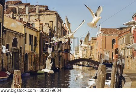 Flying Seagulls In A Typical Venice Canal