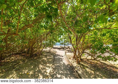 Wooden Boardwalk To The Beach In Guadeloupe, French West Indies. Lesser Antilles, Caribbean Sea