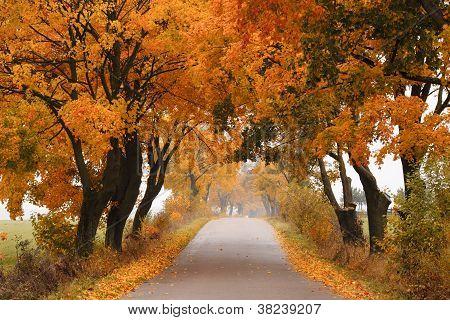 Autumn maple road.