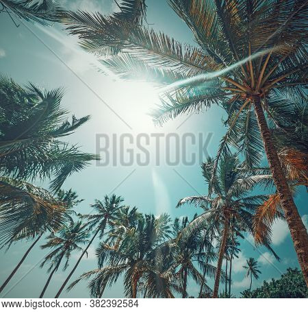 Sun Shining Over Palm Trees In Guadeloupe, French West Indies. Lesser Antilles, Caribbean