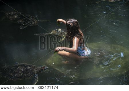 Girl Feeding A Group Of Green Sea Turtle With On Seaweed, Caretta Tortoise In Nungwi, Zanzibar, Tanz