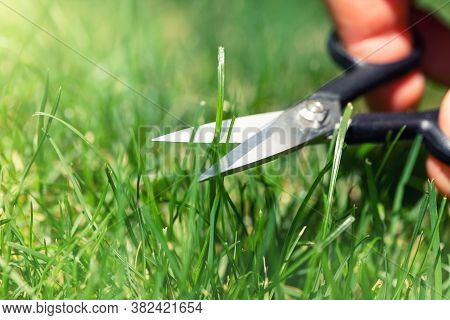 Close-up Detail View Of Man Hand Cutting Green Grass On Backyard Garden With Small Nail Scissors On