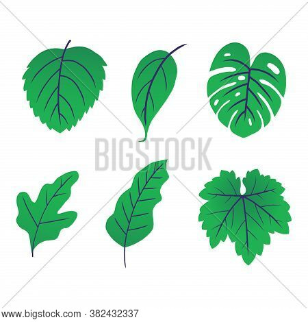 Leaf Set. Leaf Icon. Green Leaf Vector Set. Leaf Icon Vector. Leaves. Leaf Vector Icon. Green Nature