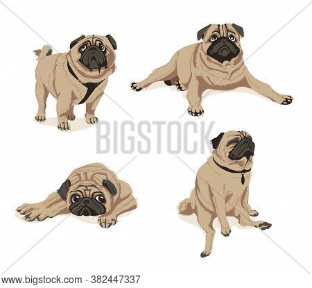 Cute Fawn Pug Dogs Set. Adorable Friendly Chubby Pet Animal In In Different Poses Cartoon Vector Ill
