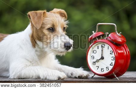 Daylight Savings, Manage Time, Cute Pet Dog Puppy With A Red Retro Alarm Clock