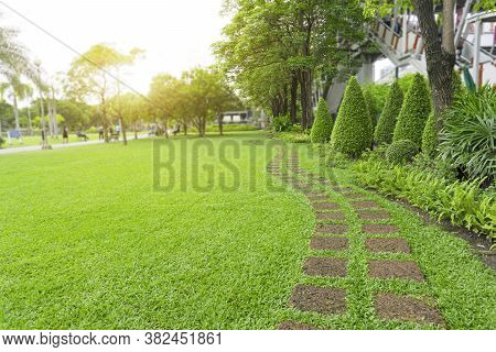 Curve Pattern Of Laterite Steping Stone On A Fresh Green Grass Smooth Lawn In The Public Park, Ficus