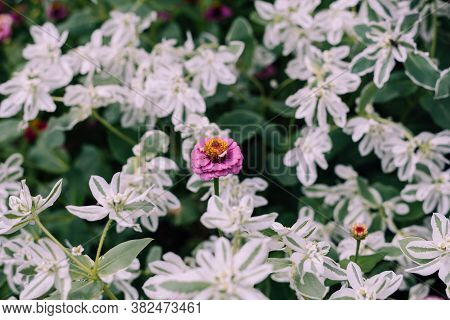 Close Up Of Flowers Nature Background Nature Background Of Flowers In Courtyard. Green Nature Backgr