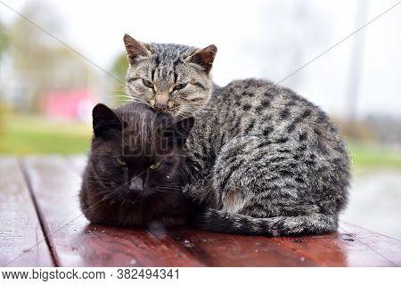 Kittens Freeze On The Street