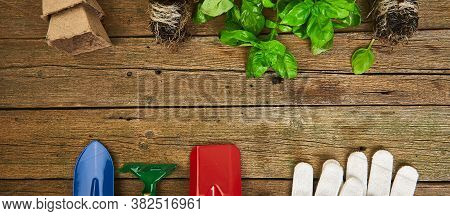 Flat Lay Of Gardening Tools, Basil, Greens Eco Flowerpot, Soil On Wooden Background.